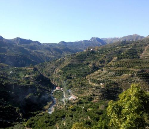 Campo view-3